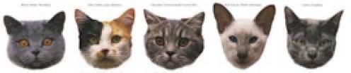 cat divider