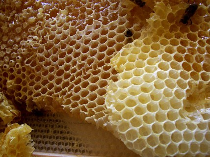 Honey-comb
